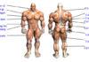 các nhóm cơ trên cơ thể nên tập cùng nhau