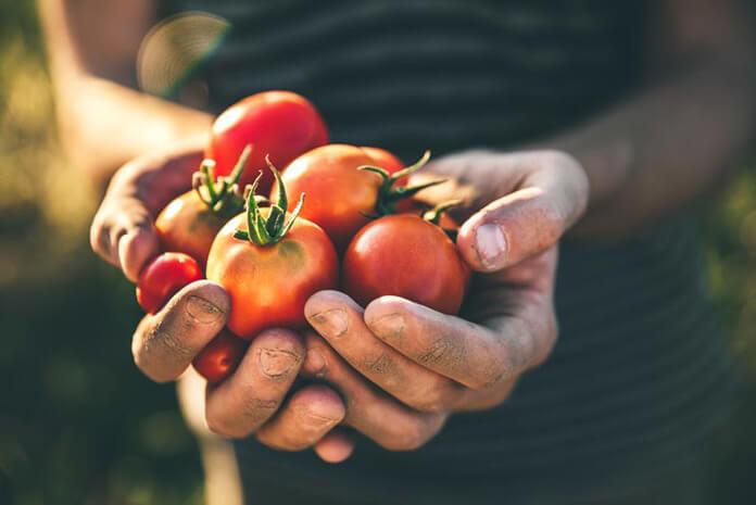 Cà chua chứa nhiều Collagen