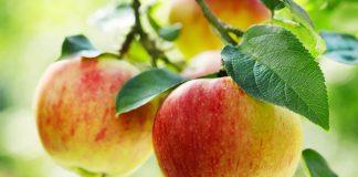 ăn táo có giảm cân không